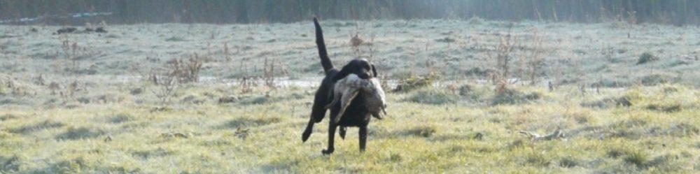 Jachthonden Gouda